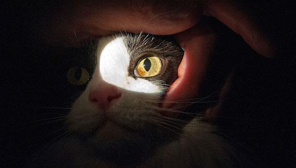 A Pussy Cats eye treatment