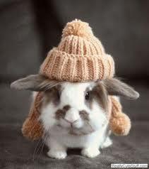 rabbit in bobble
