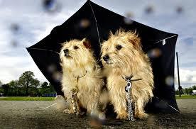 dogs in rain