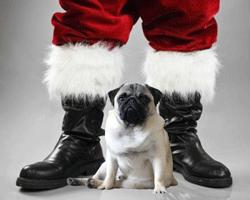 santa and pug