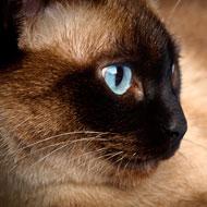 cat kidney disease