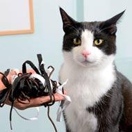 shoelace cat
